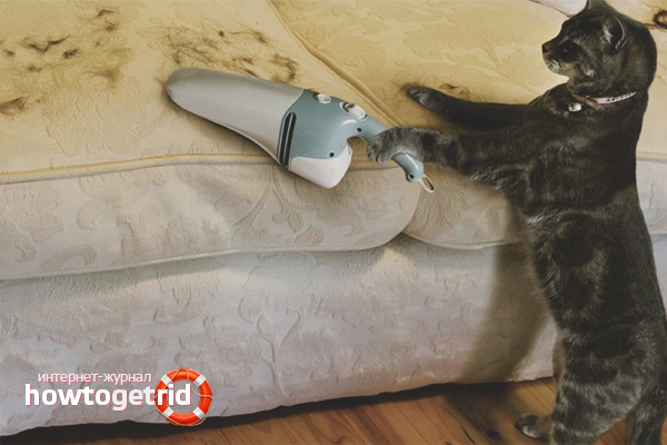 Как убрать с одежды волосы кошачьи