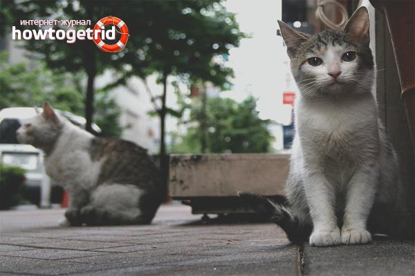 Как избавиться от бездомных котов и кошек