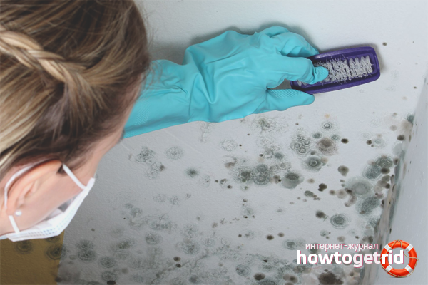 Профилактика грибка: как избежать появления на стенах и потолке рекомендации
