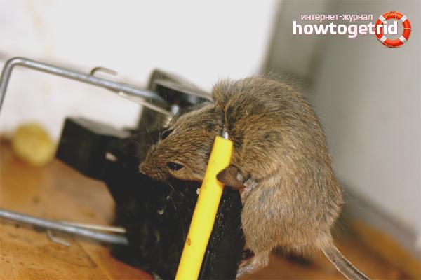 Мышеловки против мышей