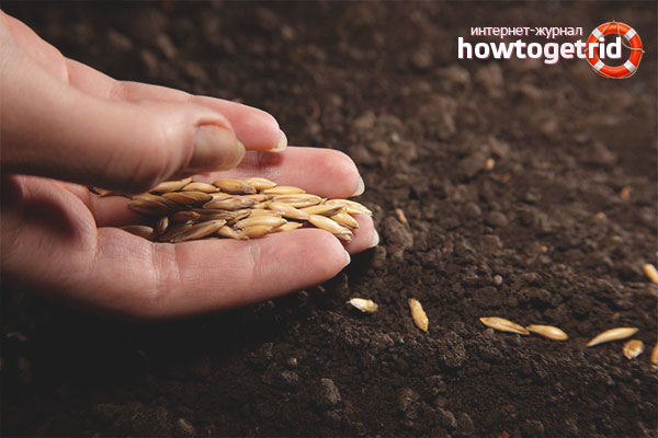 Этапы выращивания рассады