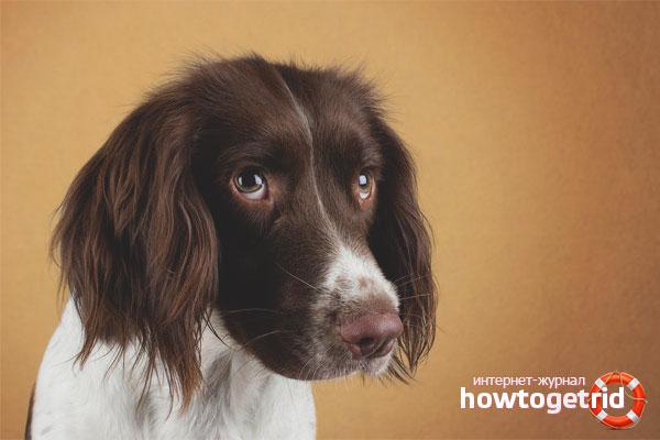 Как помочь собаке избавиться от урчания в брюшной полости