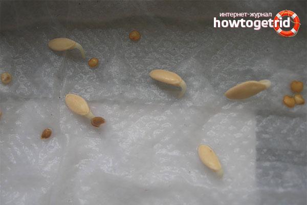 Как семена огурцов подготовить к высадке