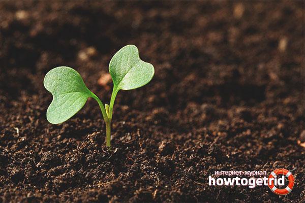 Подготовка грунта для высадки капусты