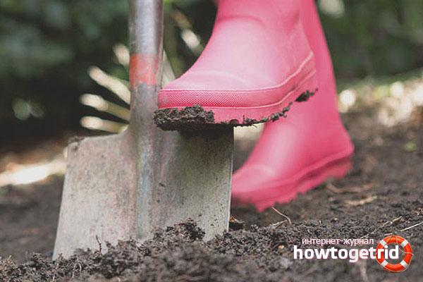 Подготовка почвы для барбариcа