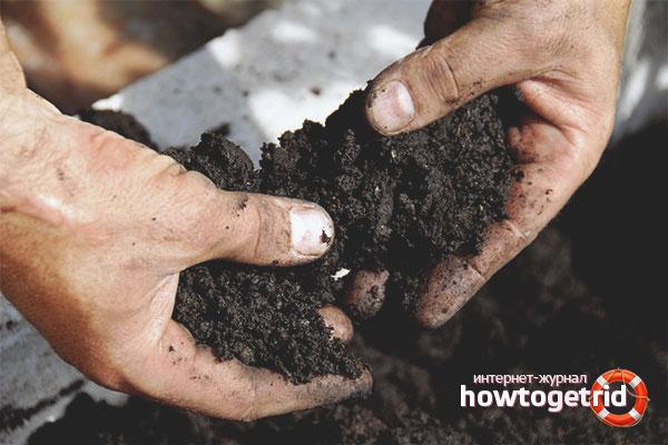 Рецепты почвы для крепкой рассады перца