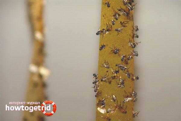 Самодельные ловушки от мух