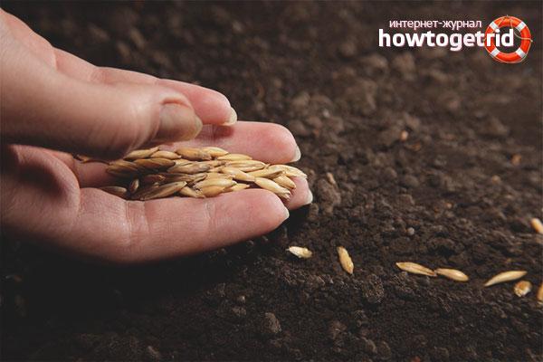 Высадка семян в таблетку