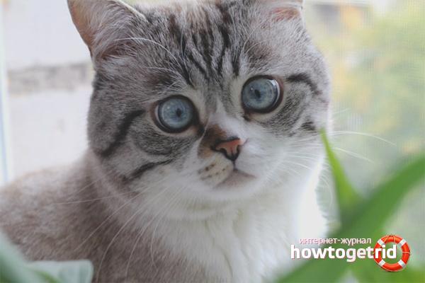 Как отучить кошку гадить, где попало