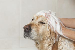 Как избавиться от запаха псины у собаки
