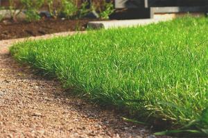 Как посадить газонную траву
