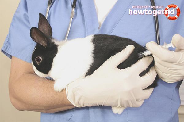 Вакцинация и лечение кроликов
