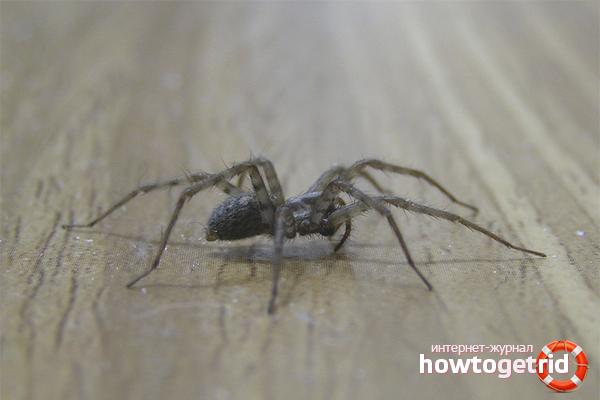 Как бороться с пауками
