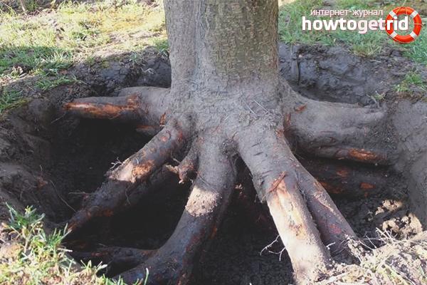 Как избавиться от корней деревьев