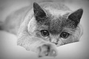Как избавиться от ушных клещей у кошки