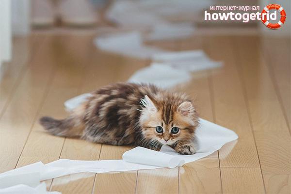 Поведение котенка