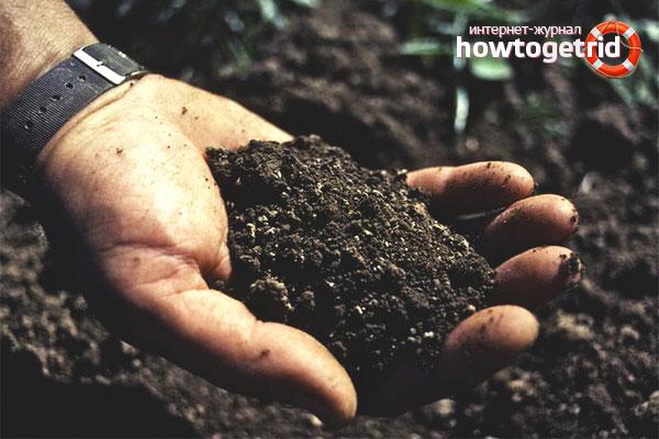 Как самостоятельно определить кислотность почвы