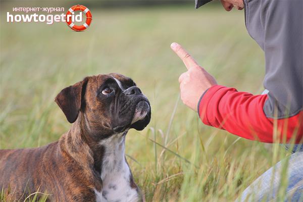 Разрешенные методы наказания собак