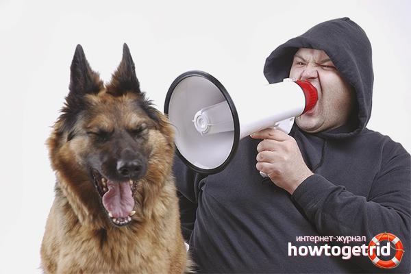 Запрещенные способы наказания собак