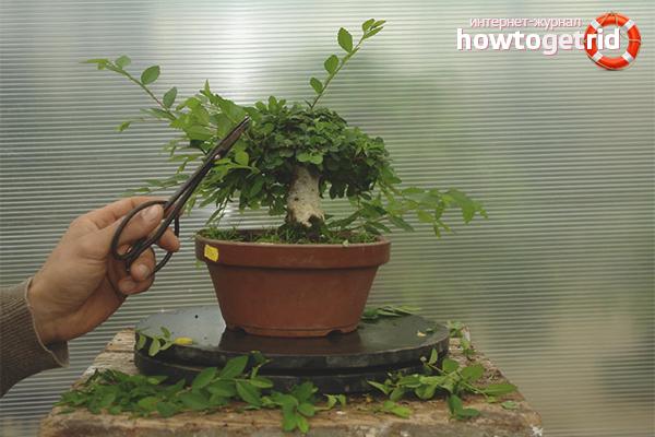 Как формировать дерево бонсай