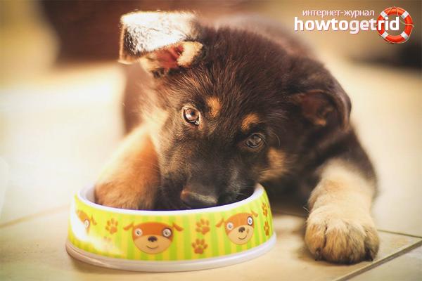 Как кормить щенка немецкой овчарки