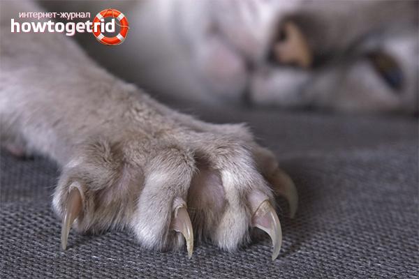 5 способов отучить кошку драть обои и мебель