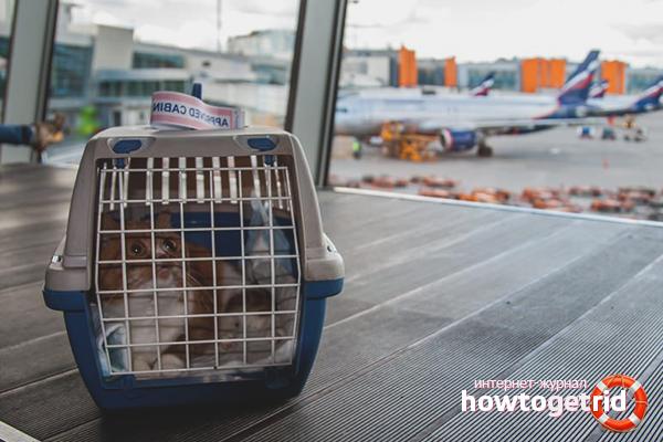 Как перевести кошку в самолёте