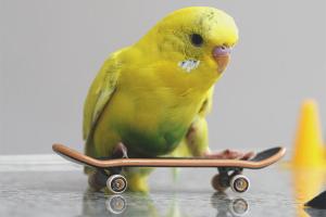 Как перевезти попугая в машине