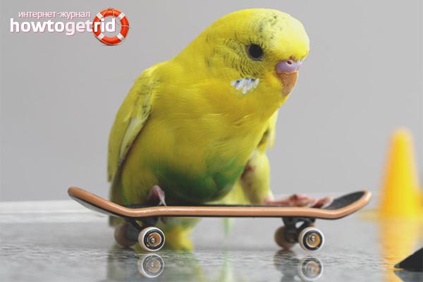Как перевезти попугая в машине: полезные советы