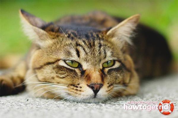 Как понять, что кошка отравилась