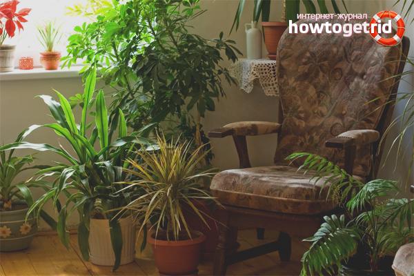 Комнатные растения для увлажнения воздуха