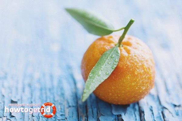Рекомендации по уходу за мандариновым деревом
