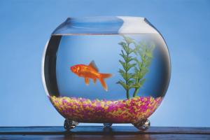 Как подготовить аквариум к заселению рыбками