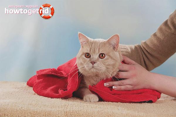 Как сушить кота после купания