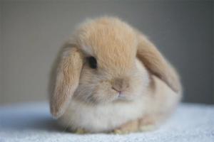 Как ухаживать за декоративными кроликами