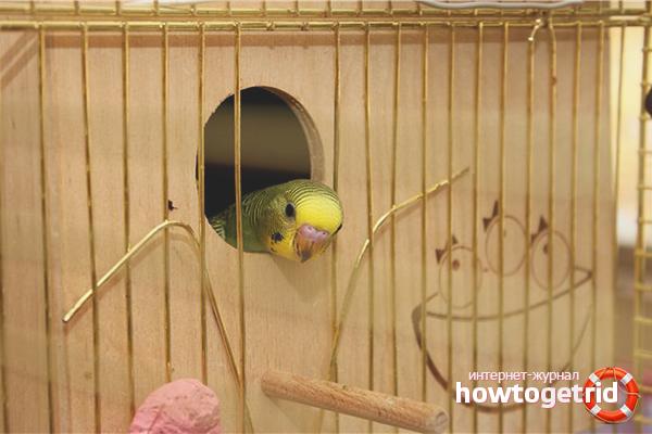 Гнездовой домик для разведения попугаев