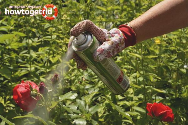 Химические препараты от тли на розах