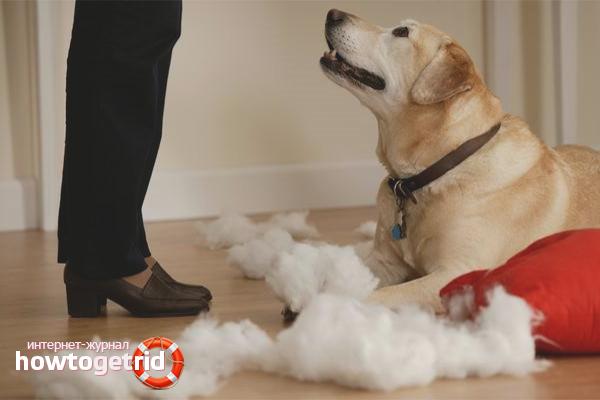 Как отучить собаку грызть вещи дома