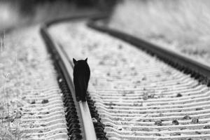 Как пережить чёрную полосу в жизни