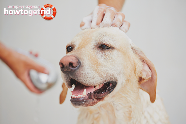 Шампунь от блох для собак