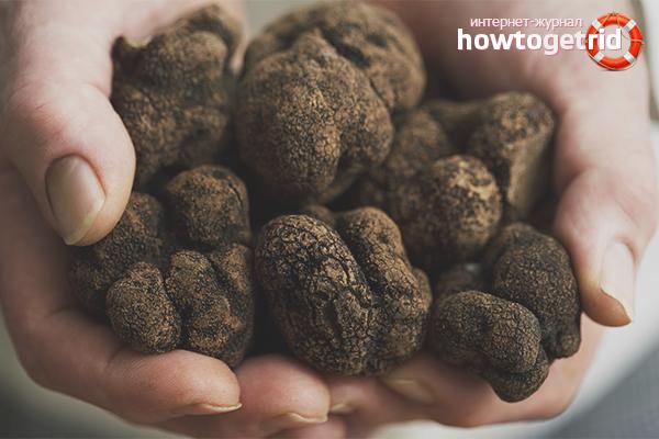 Технология выращивания трюфеля