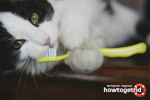 Как почистить зубы кошке
