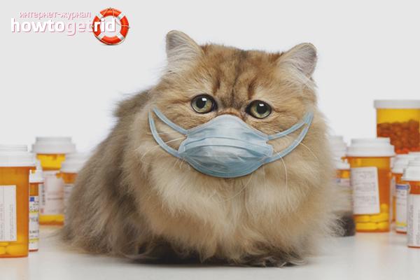 аллергия на капли от блох