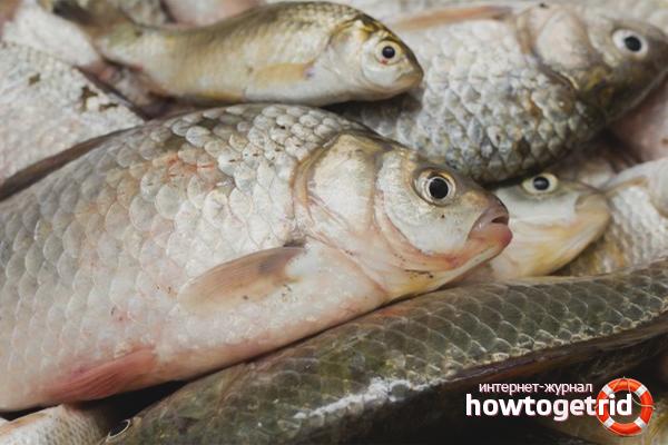 Эффективные способы разморозки рыбы