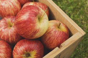 Хранение яблок