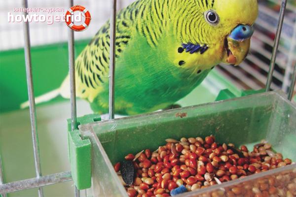 Кормушка для волнистого попугая