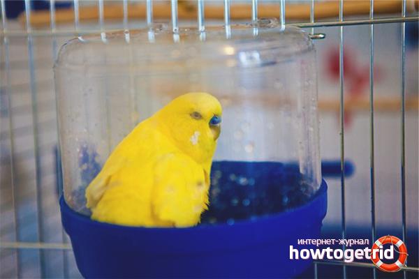Купалка для волнистого попугая