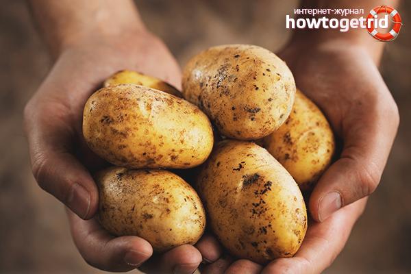 Как вырастить картошку
