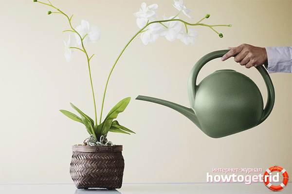 Как правильно поливать орхидею в домашних условиях
