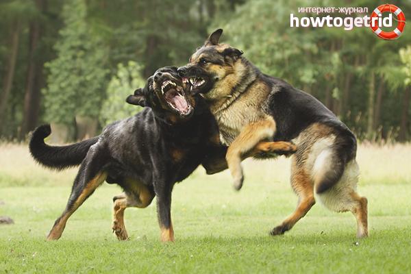 Как разнять дерущихся собак: 9 способов